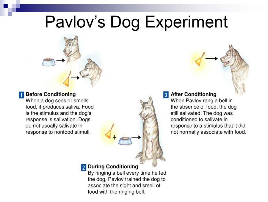 pavlov-s-dog-experiment-l